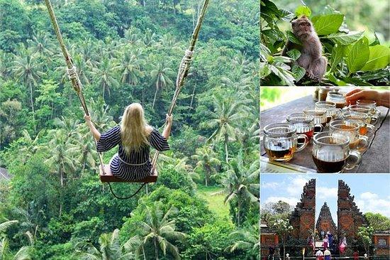 私人旅游:乌布最佳丛林秋千
