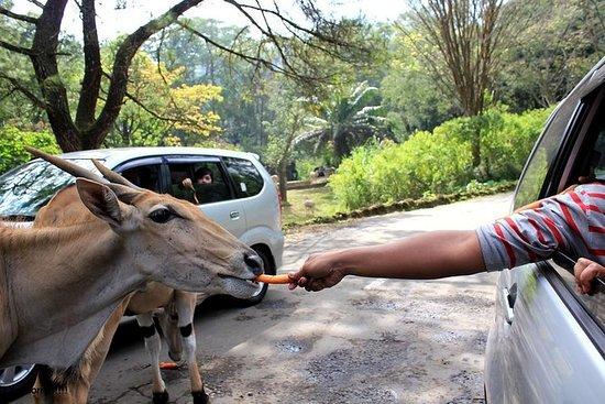 Back to Nature at Puncak Safari Park...