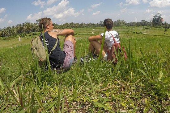Rice Field Trekking