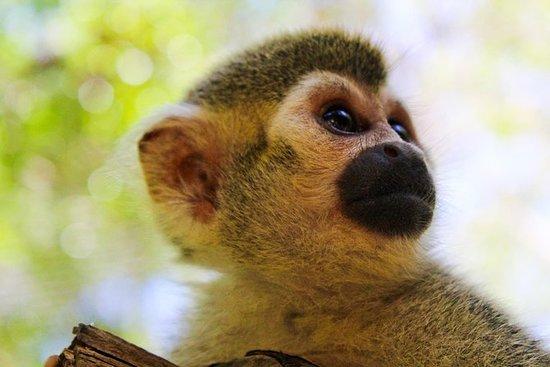 Aventura de praia do macaco safari