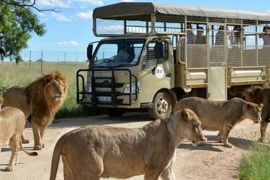 Lion Park Half Day Tour From R9 99