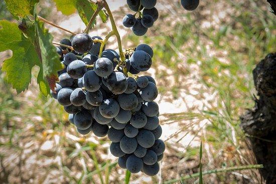 Weintour Sardinien