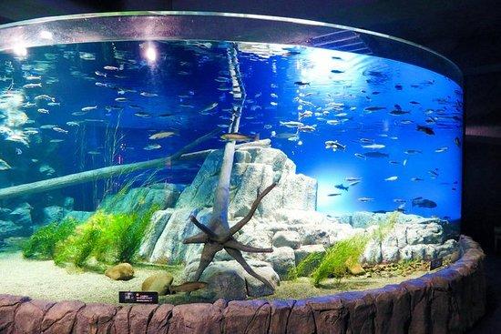 Chitose Salmon Aquarium Admission...