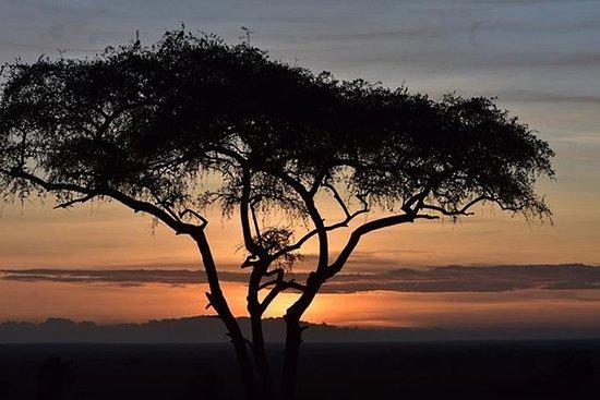 5 Days: Manyara, Serengeti And Ngorongoro Camping Safari.: WILD SAFARI ADVENTURE