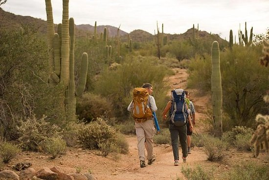 Halv dag Private Sonoran...