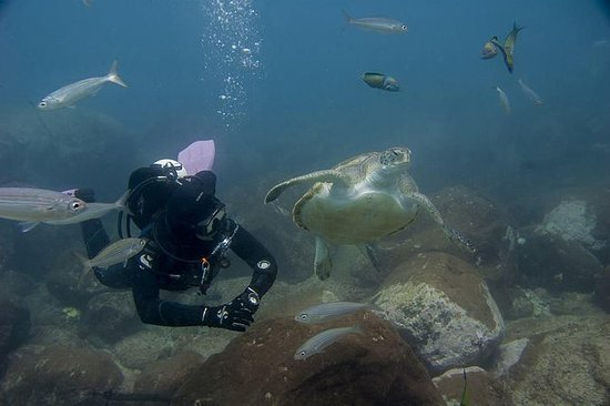 Scuba Diving Package in South...
