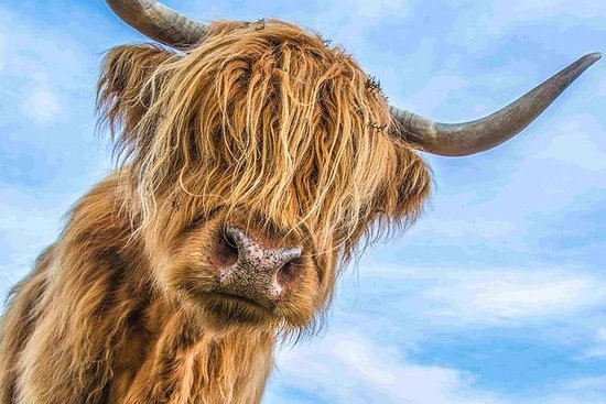 Best of Scotland på en dag og...