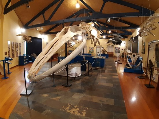 SGHN - Museo de