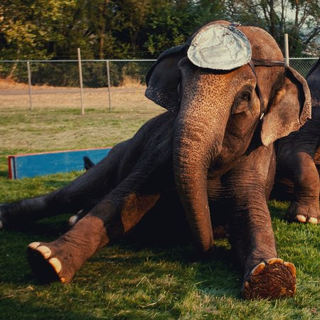 Davis County, UT: Elephants at the fair