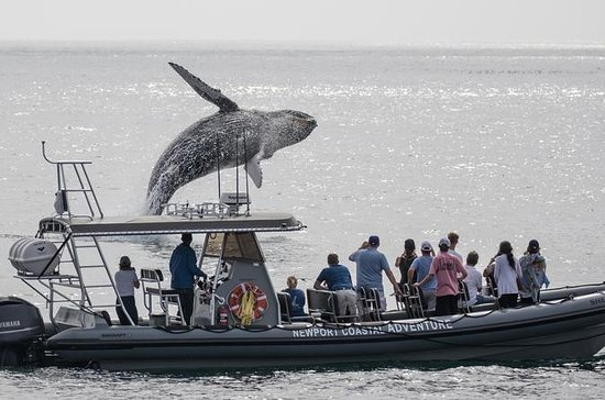 Ultimate Whale Watching Tour aboard...