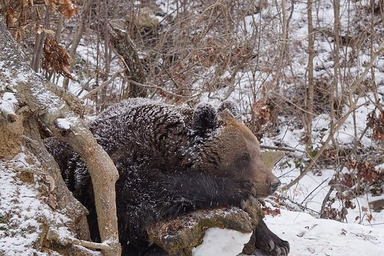Libearty Bear Sanctuary and Bran...
