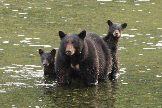 Wildlife - Historical - Totems...
