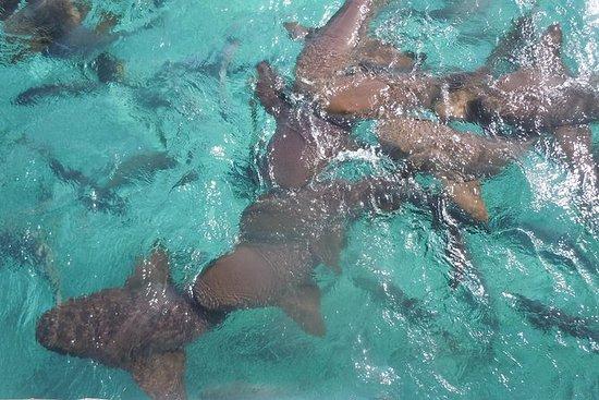 鲨鱼,射线和海滩度假。