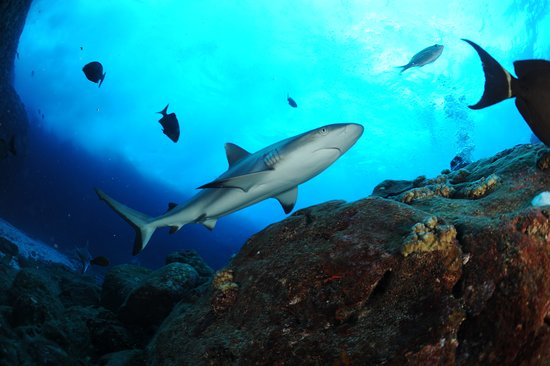 Blue Water Diving Centre Ltd: plongée dans les iles du nord. Ca se mérite mais c'est inoubliable !