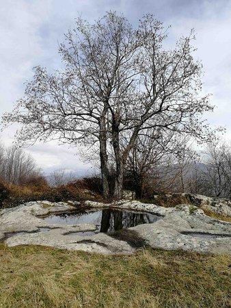 Moio della Civitella, Italia: albero sulla sommità