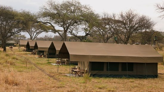 Wildlife Expedition & Safaris: Our Serengeti Tented Camp