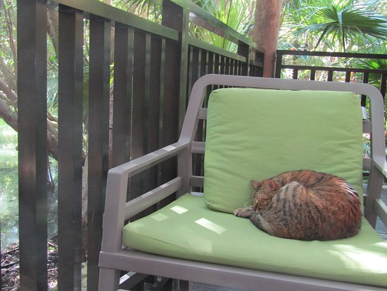 One of the many cats around the resort