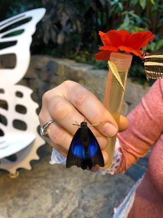 Valokuva: The Butterfly Palace
