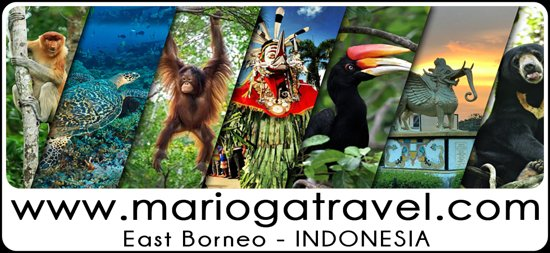 East Borneo Wild Life, Nature & Culture
