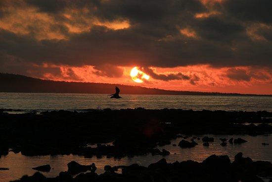 On the beach at dawn at Finch Bay....