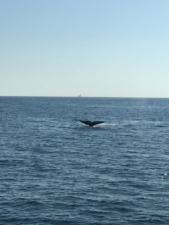 Whale Watching Mirissa with Geeth – fotografia