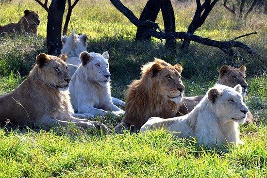 Safari & PheZulu Village Day Tour fra...