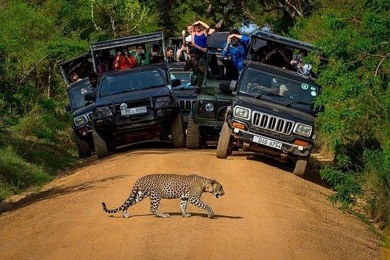 Excursion de 5nuits au Sri Lanka