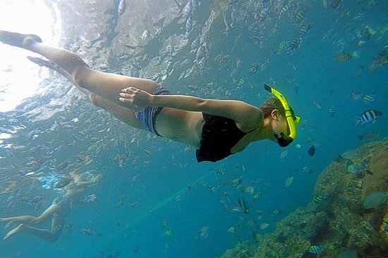 Phi Phi Snorkeling Day Trip by...