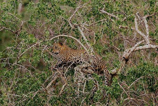 雅拉国家公园的私人半日野生动物园与博物学家