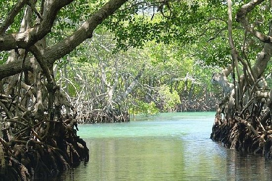 Roatan Highlight Mangrove Tour