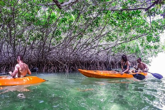 Clearbottom Mangrove Kayak & Snorkel