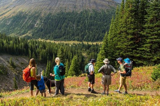 Hike Canada's Highest Pass - Larch...
