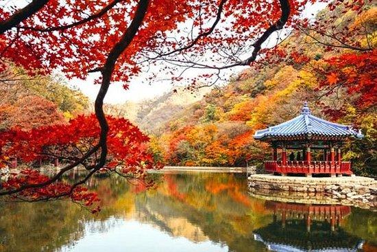 Naejangsan National Park tur i høst...