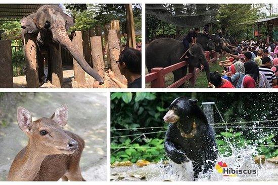 Elephant Sanctuary, Deerland Park og...