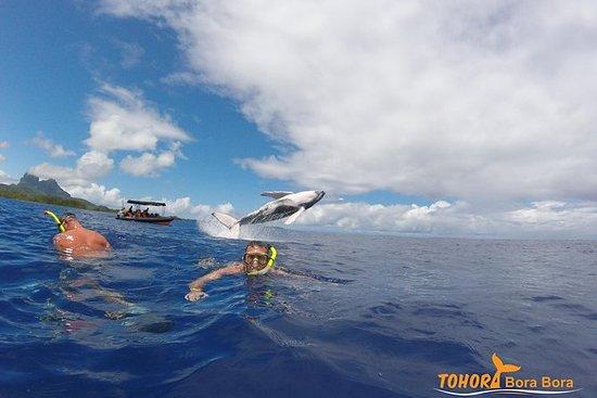 Avistamiento de ballenas en Bora Bora