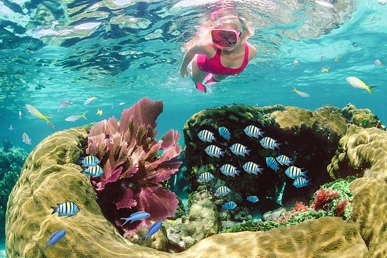 THE 10 BEST Key Largo Scuba & Snorkeling Activities (with