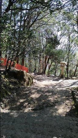 船岡山公園を抜けて建勲神社へ向かう山道