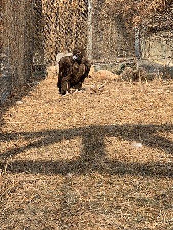 Beijing zoo!是一個非常適合5-60歲參觀場所!其內的公共衛生間是北京最乾淨的!本日前往溫度零下五度!所以最有活動力動物是北極熊先生!