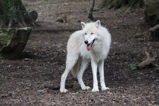 Jurques, Frankreich: Wölfe