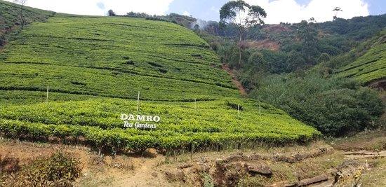 Macwood Tea Factory (Nuwara Eliya) - 2019 Book in Destination - All
