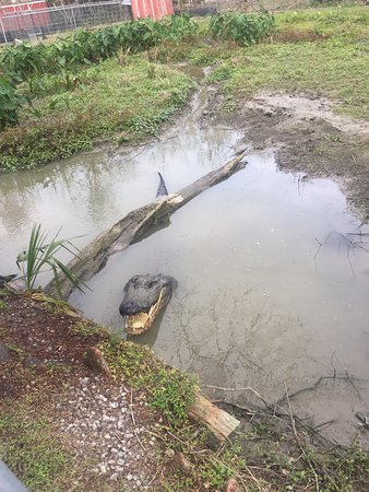 Typique du bayou, à faire