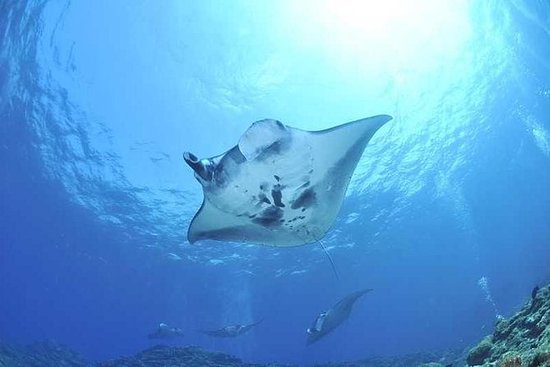 The Best Snorkeling With Manta Rays...
