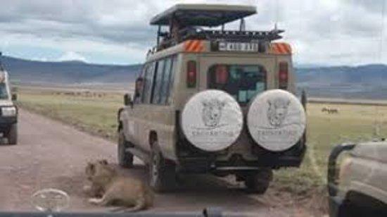 Enchanting Tanzania Safaris
