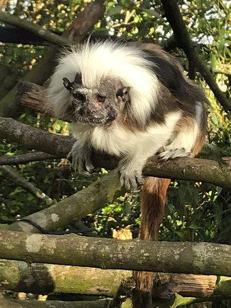 Belfast Zoo ภาพ