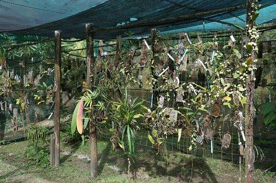 La serre aux orchidées - Photo de Jardin Botanique de Guyane ...