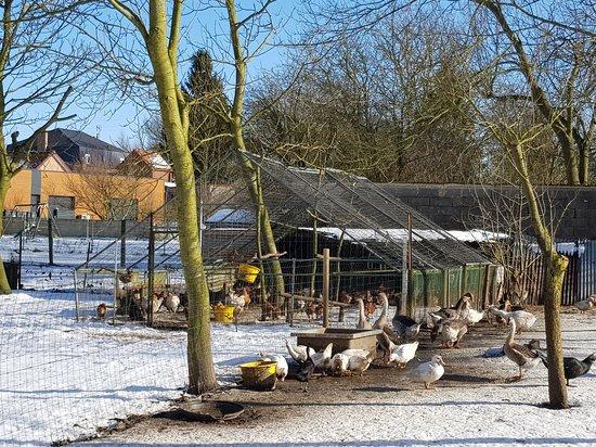 Maretz, Franciaország: ferme pédagogique / Vente de produits fermiers