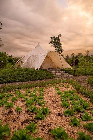 Lotus Belle Luxury Tent set along the mandala garden