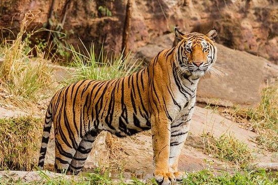 Wayanad wildlife heaven tour in Kerala