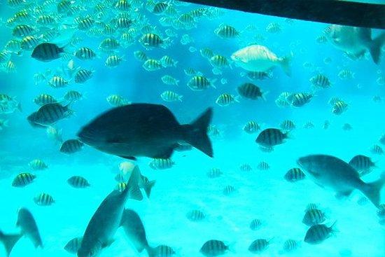 玻璃底船,懶人 - 猴子公園和西灣海灘