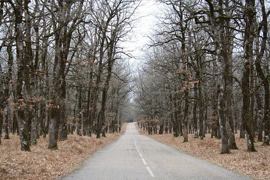Elis Region, Hy Lạp: Ο δρόμος που διασχίζει το Δάσος της Φολόης.